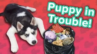 Puppies in Trouble & Crafty Bears! // Funny Animal Compilation
