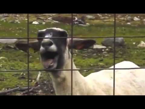 Rick Astley - Never Gonna Give You Up (Goat Remix)