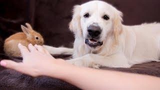 Dog Protects Rabbit