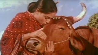 Jaya Bachchan, Gaai Aur Gori  - Scene 1/20