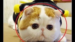 Funny Cats - Funny Cat Videos- Funny Cats Videos Compilation 2016✔NEW HD