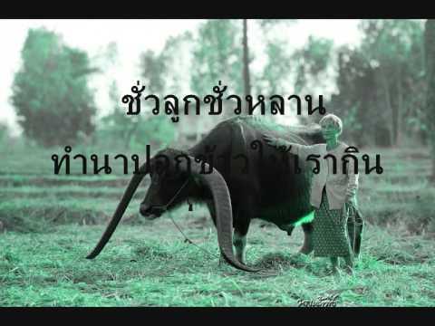 ควายไทย