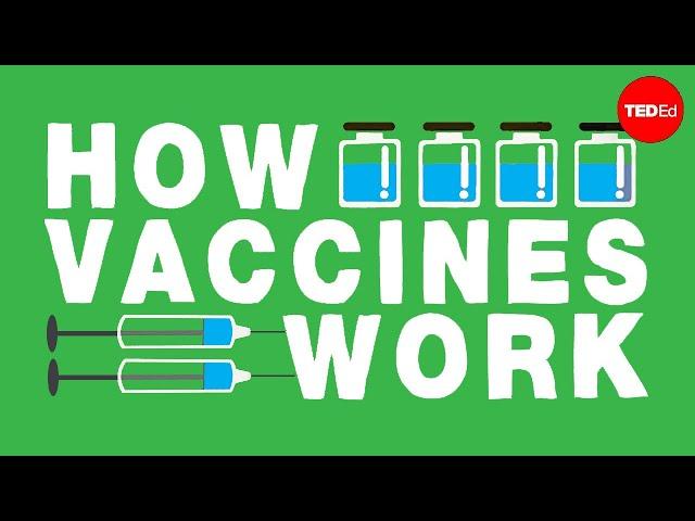 Wie wirken Impfstoffe? – Kelwalin Dhanasarnsombut