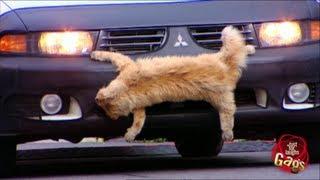 لمجرد الضحك: دهس قطة ضائعة