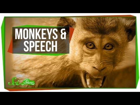 Why Can t Monkeys Talk Like Us