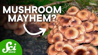 10 Fantastic Fungi Superpowers