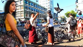 Mobbed by pigeons in Downtown Yangon
