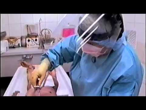 Xxx Mp4 The Embalming Process Mp4 3gp Sex