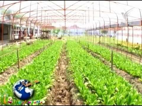 กินอยู่คือ เกษตรอินทรีย์เรือนจำ 13Mar12