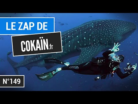 Le Zap de Cokaïn.fr n°149