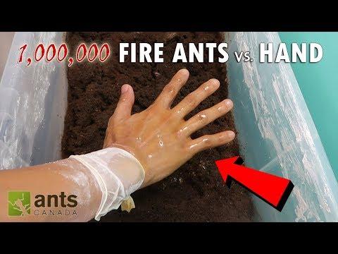 Xxx Mp4 FIRE ANTS VS MY HAND 3gp Sex