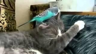 Parakeet bothering a cat