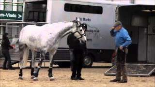 Monty Roberts and Freddie the non-loader at Hartpury College (2013)