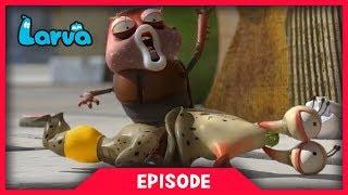 LARVA - MASSAGE | Cartoon Movie | Cartoons For Children | Larva Cartoon | LARVA Official