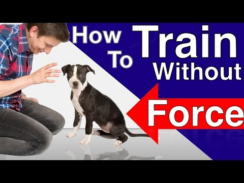 Xxx Mp4 How To Train Your Dog Without Force Stop Puppy Biting Pay Attention And Train Smarter 3gp Sex