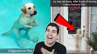 HILARIOUS DOG SNAPCHATS!