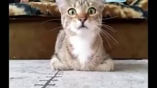 যখন বিড়াল ভুতের ছবি দেখে তখন কি হয় দেখুন when cat watch horror clip