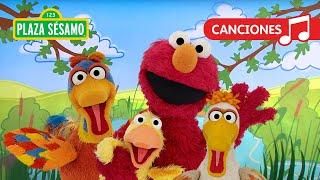 Sésamo: ¡Elmo y sus amigos patitos!