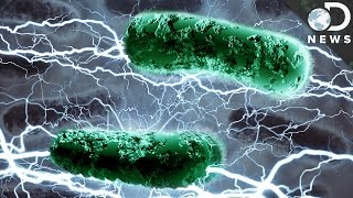 Can Bacteria Live Off Electricity?
