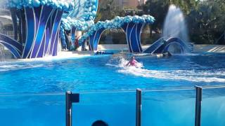 Blue horizon - SeaWorld 12/2012