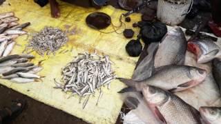 Biggest fish market in odisha bhubaneswar