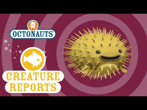 Octonauts Creature Reports Porcupine Puffer