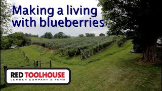 ep129: Blueberries are the bumper crop for this farm