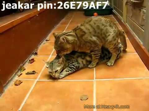 Xxx Mp4 VID 20120414 WA0002 Mp4 3gp Sex