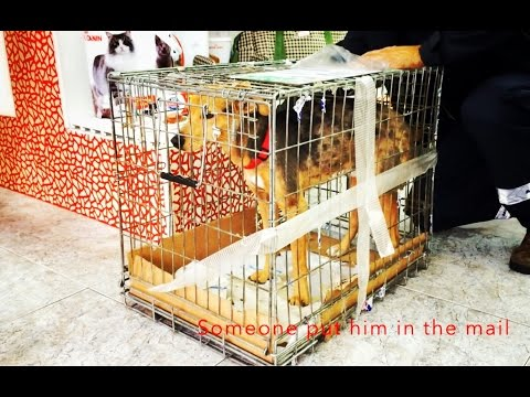 DOG PUT INSIDE A METAL CRATE IS SENT TO RESCUE BY MAIL PLEASE SHARE