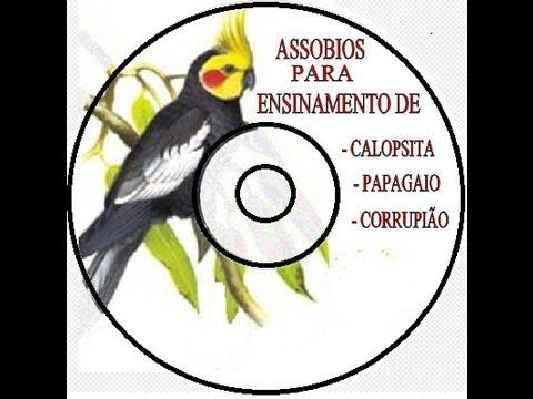 CANTO PARA CALOPSITAS PICA PAU