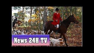 Vast majority of british people against repealing fox hunting ban, poll reveals | News 24H TV