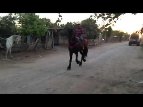 Ishi se cae del caballo frisón puente de picos cd Obregón s