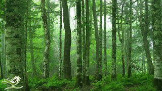 """Beautiful Relaxing Music: """"Deep in the Forest"""" by Peder B. Helland (Official Video)"""