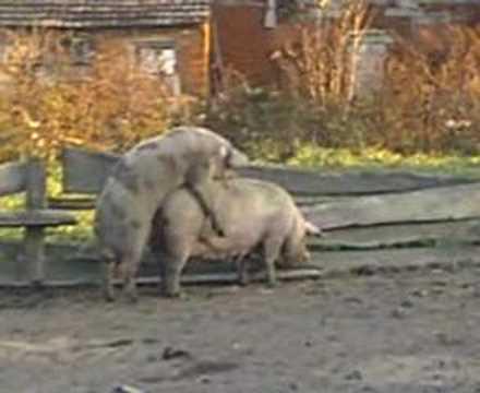 Edukativni video o potrebama razmnozavanja zivotinja