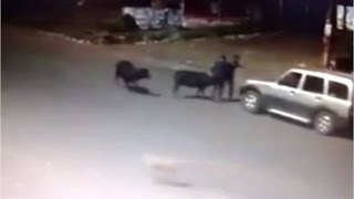 Grand theft Cow ( Must watch) !!