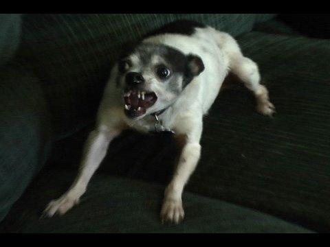Very Angry Dog