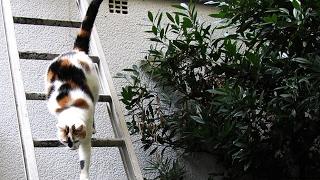 Katze klettert auf Leiter