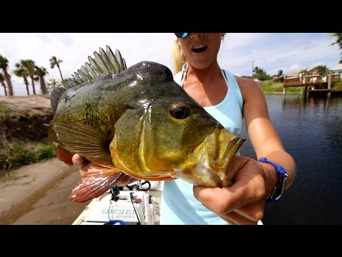 Bed Fishing Canals for Florida Peacock Bass ft. tips & tricks