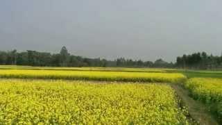 Gram Bangla Village Scenario