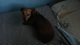 Maggie destendiendo la cama