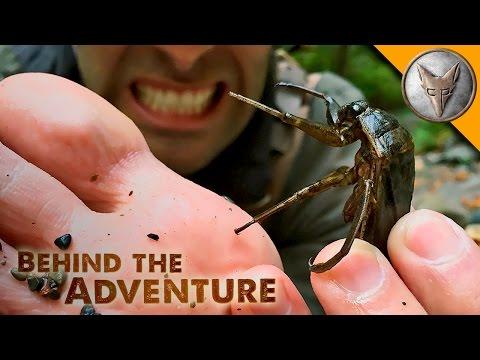 TOE BITER Giant Water Bug