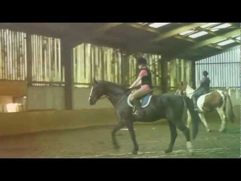 Looking for myself; Horse riding|| Beautiful horses