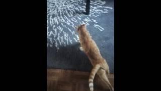 Cute lil pussy