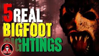 5 Creepy REAL Bigfoot Sightings - Darkness Prevails