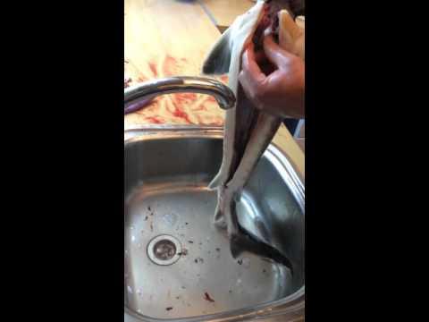как почистить стерлядь в домашних условиях видео