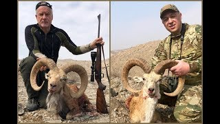 Blanford Urial hunt in Pakistan - Hunting for Conservation