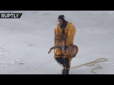 Xxx Mp4 Firefighters Rescue 14yo Labrador From Frozen Lake In US 3gp Sex