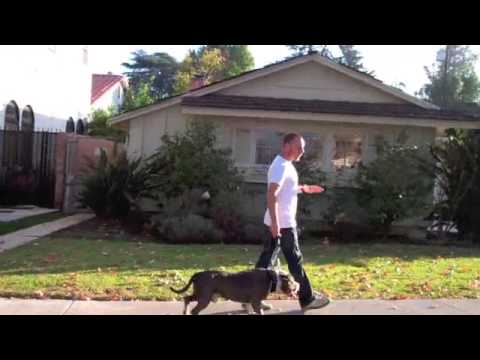Learn to Train TGD Way Pitbull Mix Leash Pulling Resolved In One Dog Training Session