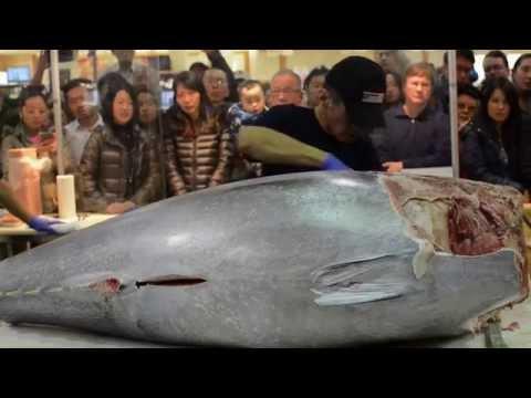 10 000 Knife Cuts Bluefin Tuna like Butter Part 2