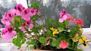 Farklı çiçeklerle saksı kompozisyonu / Balkon dekorasyonu